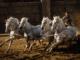 """Chariot racing in """"Ben-Hur."""" (United International Pictures)"""