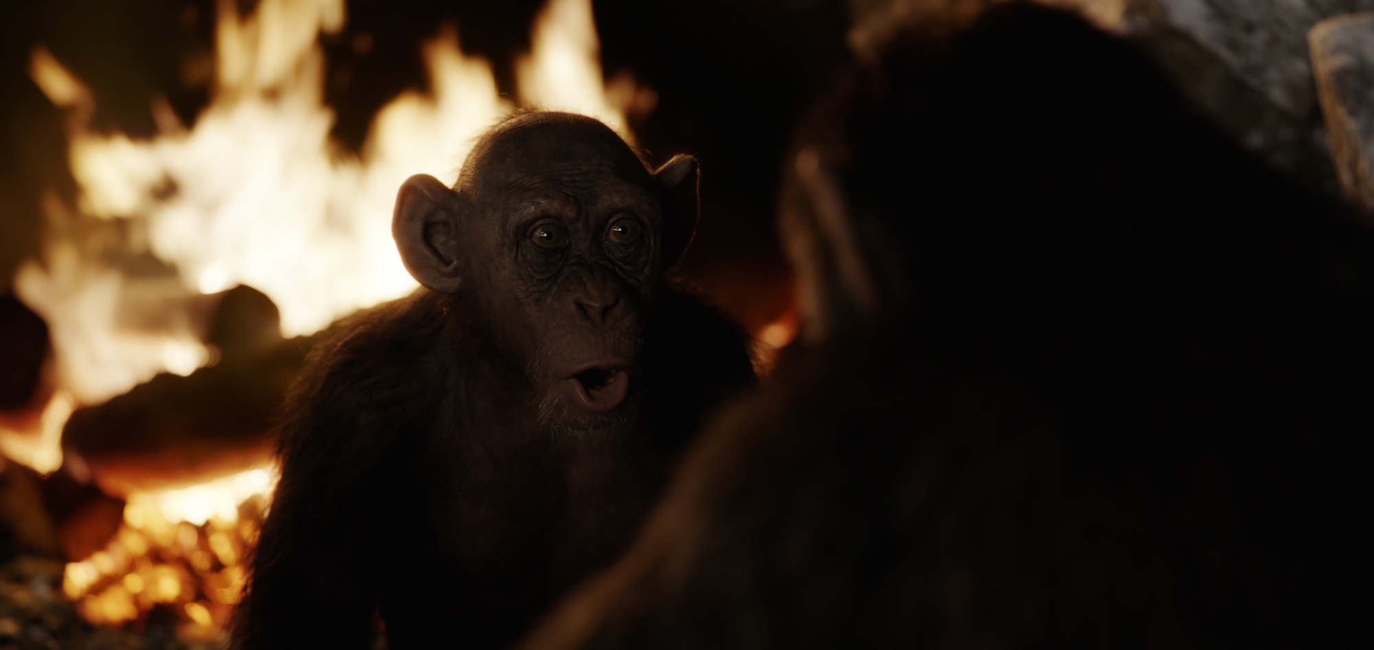 "Steve Zahn as Bad Ape in ""War for the Planet of the Apes"". (Twentieth Century Fox)"